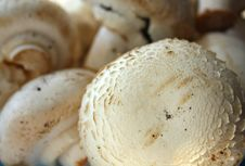 Free Champignon Royalty Free Stock Photography - 7966507