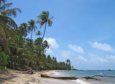 Free Tropical Beach Royalty Free Stock Photos - 7968018