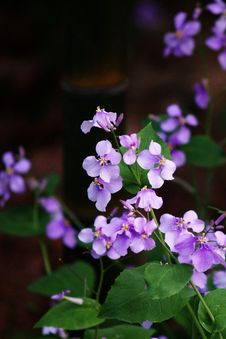 Free Purple Flower Royalty Free Stock Image - 7968036