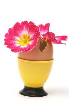 Free Easter Stock Photos - 7968723