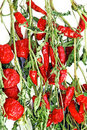 Free Dry Red Hot Chilly Peppers Backgrounds Royalty Free Stock Images - 7973119