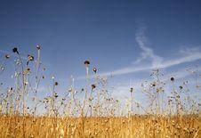 Free Grassland Stock Image - 7970111