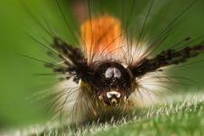 Free Caterpillar Face Macro Stock Photos - 7971173