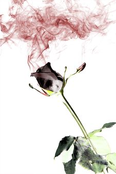 Free Rose And Smoke Royalty Free Stock Images - 7971659