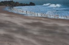 Free Seagulls Standing By The Water. Stock Photos - 7971663