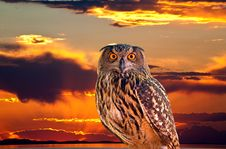 An Owl And Sunrise At The Salt Lake Royalty Free Stock Photos