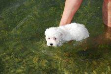 Free Little Dog Swimming Stock Photography - 7972742