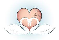 Free Valentine Design With Swans Stock Photo - 7973220