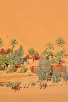 Free Oasis In Sahara Royalty Free Stock Photo - 7976665