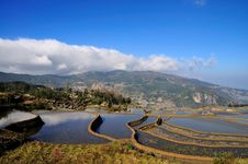 Free Yuan Yang Rice Terrace Royalty Free Stock Photos - 7977268