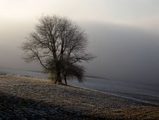 Free Tree In Foggy Field Royalty Free Stock Images - 7977889