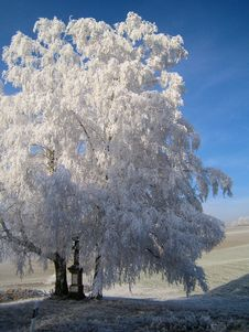 Free Tree  With Frost Royalty Free Stock Photos - 7977898