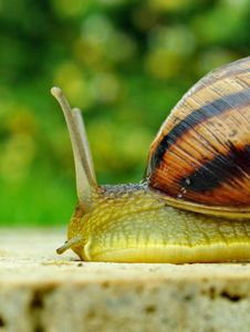 Free Snail On A Green Stock Photo - 7978170