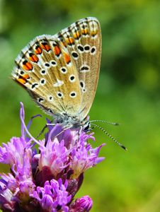 Free Butterfly On A Green Royalty Free Stock Images - 7978389