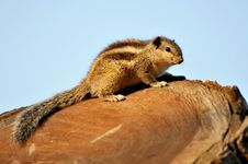 Free Squirrel Stock Photos - 7979003