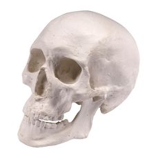 Free Plaster Skull Royalty Free Stock Photos - 7979808