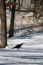 Free Turkey Royalty Free Stock Image - 7981326