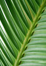 Free Palm Leaf Royalty Free Stock Photography - 7982337
