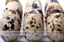 Free Quail Eggs Stock Photos - 7980303