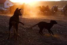 Free Dog At Sunset Royalty Free Stock Image - 7980496
