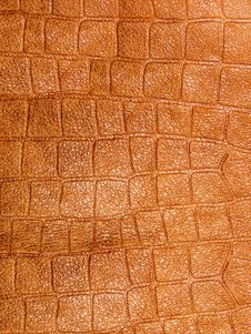 Free Skin Structure Stock Image - 7980501