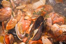 Free Mussels And Clams Stock Photos - 7981303