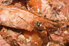 Free Shrimps Royalty Free Stock Images - 7981359