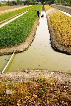 Free Vegetable Planting Stock Image - 7983701