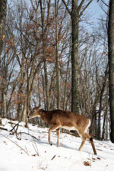 Free Deer Stock Photography - 7984092