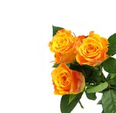 Free Beautiful Roses On A White Background With Space F Stock Images - 7984194