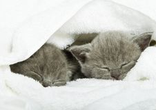 Free Kitten Over White Stock Images - 7987624