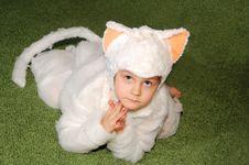Free White Kitten Costumed Royalty Free Stock Photo - 7989105