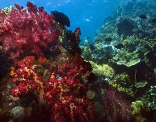 Free Coral Reef Scene Royalty Free Stock Images - 7989959