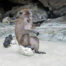Free Monkey Royalty Free Stock Images - 7990299