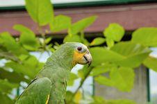 Free Parrot Stock Photos - 7991033
