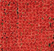 Free Red Roses Stock Image - 7991551