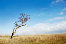 Free Tree On Sky Background Stock Photography - 7991682
