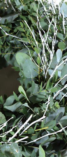 Free Eucalyptus Christmas Wreath Royalty Free Stock Images - 7991739