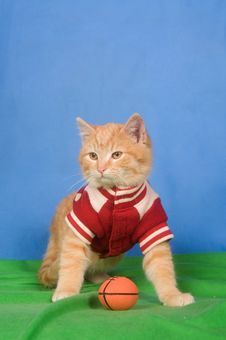 Free Football Kitten Royalty Free Stock Images - 7991749