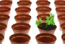 Free Parsley And Flowerpots. Stock Image - 7992371