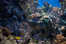 Free Coral Reef Stock Photos - 7994143
