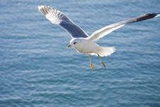 Seagull Flying Over The Sea Stock Photo