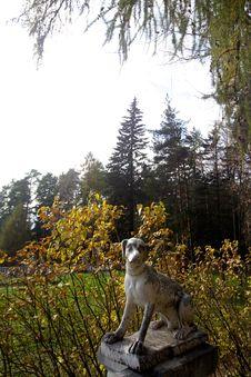 Free Marble Dog Royalty Free Stock Image - 7995526