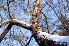 Free Snow Bole Stock Photo - 7996150