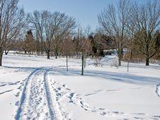 Free Snowy Tracks Royalty Free Stock Photo - 7996195