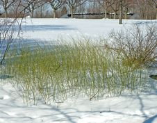 Free Green Grass In The Snow Stock Photos - 7996223