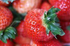 Free Fresh Strawberry Stock Image - 7996691