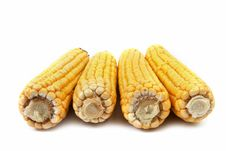 Close Up Of The Corn Cob Royalty Free Stock Photography