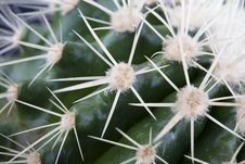 Free Cactus Stock Photo - 7996920