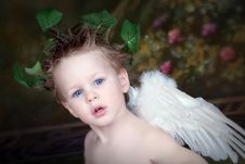 Free Little Cupid Stock Photography - 7997232